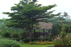 English garden. Stock Photos