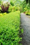 English garden. Royalty Free Stock Photography