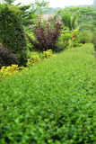 English garden. Stock Photography