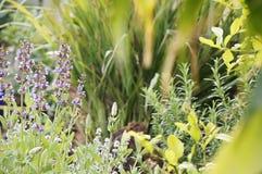 English garden Stock Photography