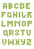 English green beans alphabet Stock Photography
