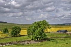 English Hay Meadows Stock Photo