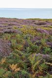 English Heathland  Stock Images