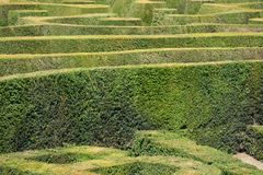 English hedge maze. From side Royalty Free Stock Photo