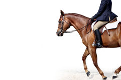 English horse and rider Royalty Free Stock Image