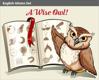 English idiom with a wise owl Stock Image