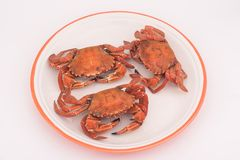 English lady crab Stock Image