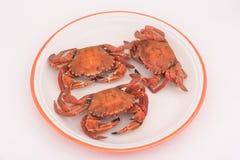 English lady crab. Boiled english lady crab Stock Image