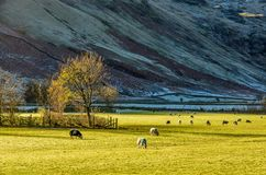 English Lake District countryside near Langdale, UK Stock Photo