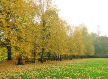 English landscape. Autumn english landscape in London England panorama image Royalty Free Stock Photos