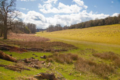 English landscape, forest and fields in spring. Sussex. UK Royalty Free Stock Photography