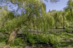 English landscape garden with pond in Spring on a summers day. Tranquil pond in an English landscape garden in Spring Stock Photography