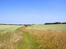 Dry grasses and wildflowers by green wheat fields in a summer landscape. English landscape with green wheat fields and grassy footpath under a blue summer sky stock photos