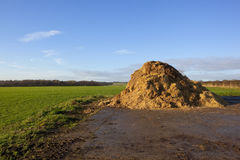 English landscape with manure. English landscape in winter with a manure heap by a field of winter cereals in the scenic yorkshire wolds Royalty Free Stock Image