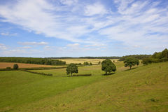 English landscape and oak trees. An english landscape in summer with sheep grazing in meadows under a blue sky with wispy white clouds in the yorkshire wolds Royalty Free Stock Photos