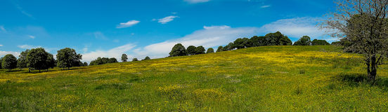 English landscape panorama. Typical English panorama landscape with flower-rich meadow and scattered trees Stock Images
