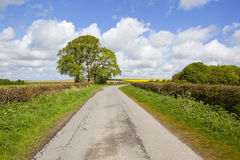 English landscape in springtime. A small country road with oilseed rape wheat fields and woodland in the yorkshire wolds under a blue cloudy sky in springtime Stock Photography