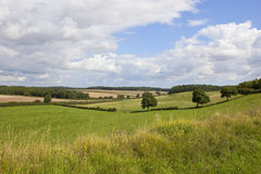English landscape and wildflowers. A traditional english country landscape with meadows woodland and livestock under a blue summer cloudy sky in the yorkshire Stock Photography