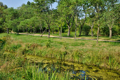 English landscaped garden in the park of Versailles Palace Stock Photo