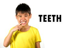 English language learning card with portrait of 8 years old child pointing his teeth isolated on white background as part of royalty free stock image