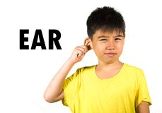 English language learning card with portrait of 8 years old child touching pulling his ear isolated on white background as part of stock photo