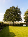 English lawn garden with large tree Stock Photos