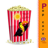English letter P. Popcorn. English alphabet. Learn the letters. Image of food Vector Illustration