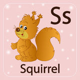 The English letter S, squirrel Royalty Free Stock Photography