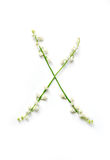 English letter X in the alphabet of flowers bells. Calligraphy lettering