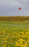 English Links Golf Course. English links coastal gold course with spring flowers Stock Photo