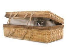 English longhair cat in basket Stock Photos