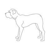 English mastiff line Royalty Free Stock Image