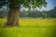English Meadow Royalty Free Stock Image
