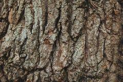 English Oak Tree Bark Background Texture Royalty Free Stock Photos