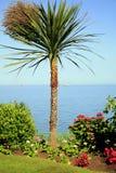 English palm tree. Royalty Free Stock Image