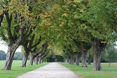 English park road and trees stock photography