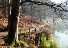 English park in winter morning Royalty Free Stock Images