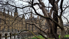 English Parliament little bit of Square and some  trees, London. England Stock Images