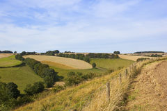 English patchwork fields. Patchwork fields in the agricultural yorkshire wolds england with trees and hedgerows under a blue sky in late summer Royalty Free Stock Photos