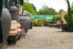 English plant nursery. Suffolk, UK Stock Image