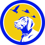 English Pointer Dog Head Looking Up Circle Retro Vector Illustration