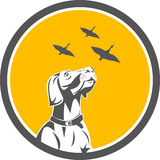 English Pointer Dog Looking at Geese Circle Retro Stock Illustration