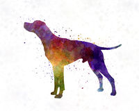 English Pointer in watercolor Royalty Free Stock Photo