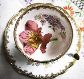 English porcelain teacup. Vintage teacup with pink flower Stock Photos