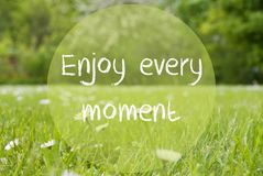 Gras Meadow, Daisy Flowers, Quote Enjoy Every Moment Stock Image
