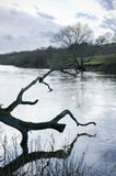 An english river with a dead tree Royalty Free Stock Photo