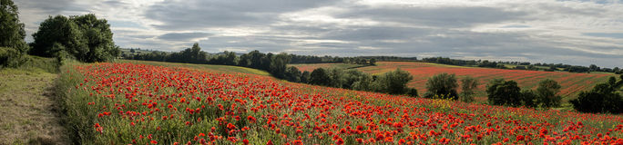 English rolling countryside full of poppies Cotswolds Stock Photos