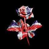 English rose Royalty Free Stock Image