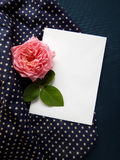 English rose and blank card for text on fabric Royalty Free Stock Image