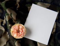 English rose and blank card for text on fabric Stock Photos